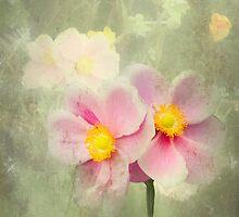 Anemones by missmoneypenny