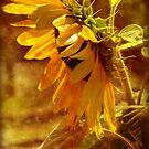 Sunny (for sunny66) by vigor