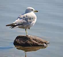 Seagulls in Yoga? by Poete100