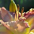 Day Lily at Dawn by William Martin