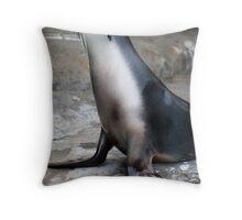 Sea Lion at Taronga Zoo Throw Pillow