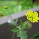 Flower on the Deck by Bulwarky