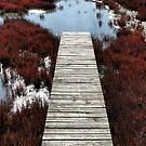 A Path to the Water. by Lynne Haselden
