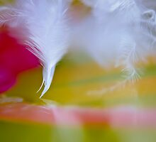 Dancing feather... by Christine Kapler