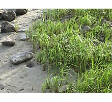 Rock the Grass Vision Photographic Print