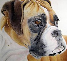 Boxer head study by boxagirl