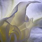 Angel's trumpet inner sanctum by Celeste Mookherjee