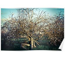 Lonely Blooming Tree Poster