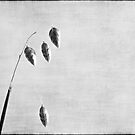 Nature in black and white XI by Anne Staub