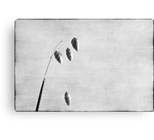 Nature in black and white XI Canvas Print