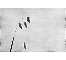 Nature in black and white XI Photographic Print