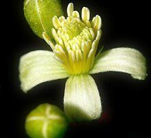 summer flower by wistine