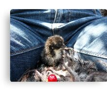 Chick and Me Canvas Print