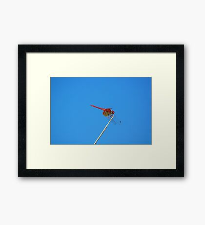 Dance of the Red-Veined Dropwing Dragonfly Framed Print
