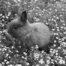 Bunny in Black & White by Michael John