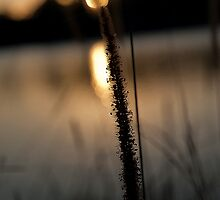 Through the reeds by gamaree L