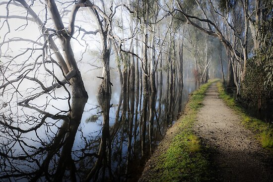 Fog on the lake, Rutherglen by Fran53