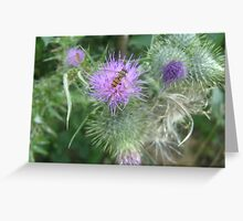 Insect on Thistle Greeting Card