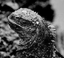 Marine Iguana in Black & White by Billboeing