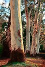 Gums in the Hills by Andrew Dickman