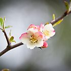 Spring Blossom by A.Lwin Digital - Chasing the Inspiration