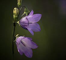 Purple Dreams by Pam Hogg