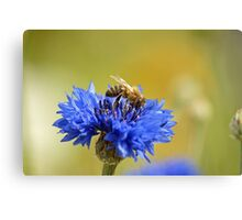 Show ground visitor Canvas Print