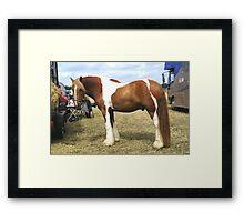 Chestnut Paint .. Gypsy Vanner Framed Print