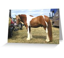 Chestnut Paint .. Gypsy Vanner Greeting Card