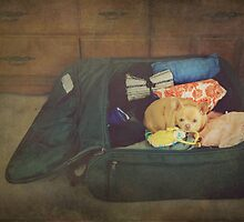 I'm Going With You by Laurie Search