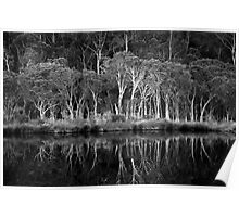 Mirrored Woodland Poster