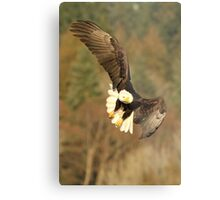 With the Presence of a Full Moon, The Eagle Soared Metal Print