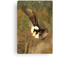 With the Presence of a Full Moon, The Eagle Soared Canvas Print