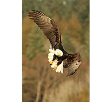With the Presence of a Full Moon, The Eagle Soared Photographic Print