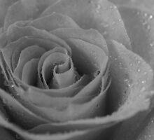 Black & White Wet Rose by nicfarrington