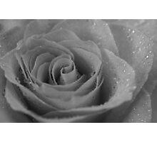 Black & White Wet Rose Photographic Print