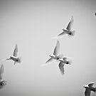 White As Snow by Eric Scott Birdwhistell