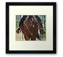 Earning My Blue Ribbon Framed Print