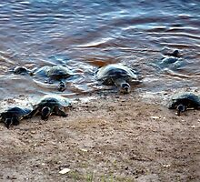 Turtle Whisperer by TheBrit