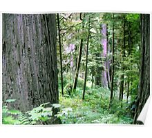 Forest Quiteness Poster