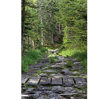 Tuckermans Ravine Trail Photographic Print