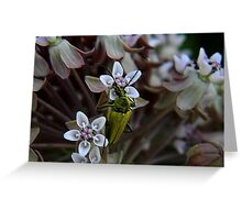 My First Bug Capture ! Greeting Card