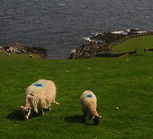 Blue Dot Sheep by Karin  Funke
