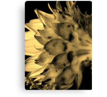 Split tone Sunflower - Sepia Canvas Print