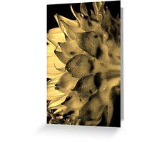 Split tone Sunflower - Sepia Greeting Card