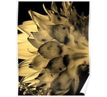 Split tone Sunflower - Sepia Poster