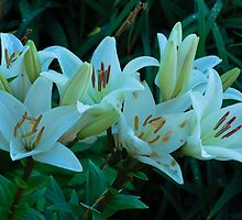 beautiful white lilies by Eduard Isakov