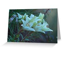 beautiful lilies Greeting Card