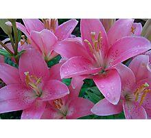 beautiful lilies Photographic Print
