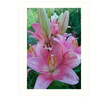 beautiful lilies Art Print